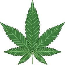Marijuana Cannabis Business Law